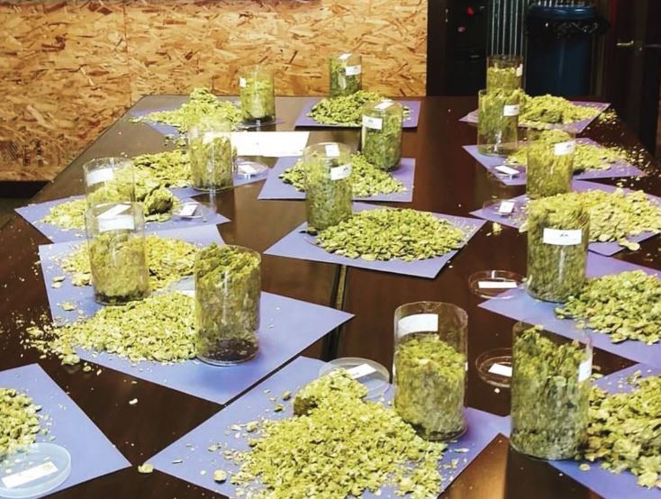 Grain to Glass Series: Hop Selection